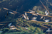Fish dead from pollution water bad problem.