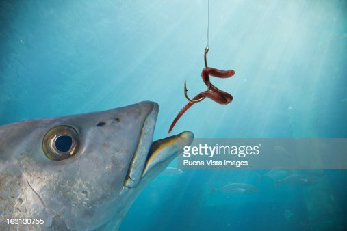 Image result for hook with worm bite fish