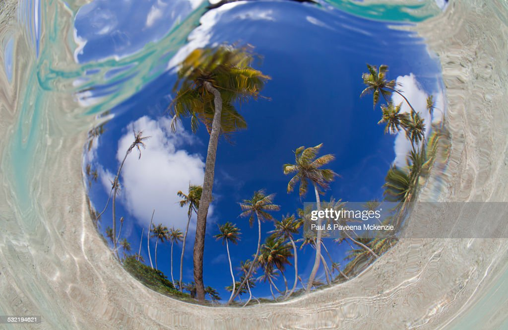 Fish eye view of coconut palms