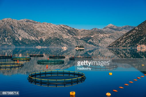 Fish farm in Montenegro. The farm for breeding and fish farming : Stock Photo