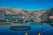 Fish farm in Montenegro. The farm for breeding and fish farming in the Bay of Kotor.
