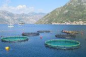 Fish farm in the bay of Kotor, the old town of Perast seen on the opposite side of the bay
