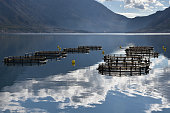 Fish farm in the bay of Kotor, Montenegro. Beautiful mirror reflections of the fish-cages seen in the calm water. High mountains on the opposite coast of the bay.