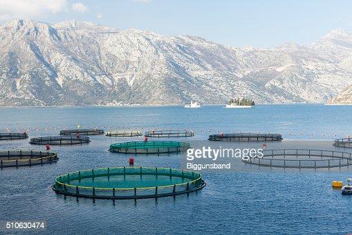 Fish farm in the Bay of Kotor : Stock Photo