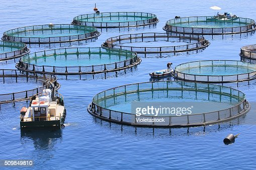 Fish farm : Stock Photo