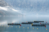 'Fish farming facility in Bay of Kotor, Montenegro. Low clouds over water.'