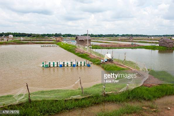 Fish farms irrigated by water from the nearby Mekong Delta near Tra Vinh in southern Vietnam