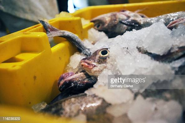 Fish for sale at Grimsby Fish Market which is recognised as being one of the most important fish markets in EuropeÊUp to 80 percent of the catch for...