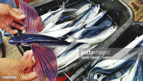 Fish for sale at market stock photo getty images for Stock fish for sale