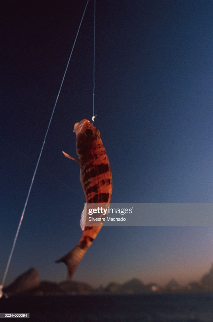 Fish Hanging on Fishing Line