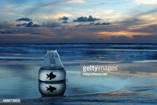 Fish in a bottle : Stock Photo