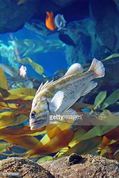 Fish in aquarium with blurred background.