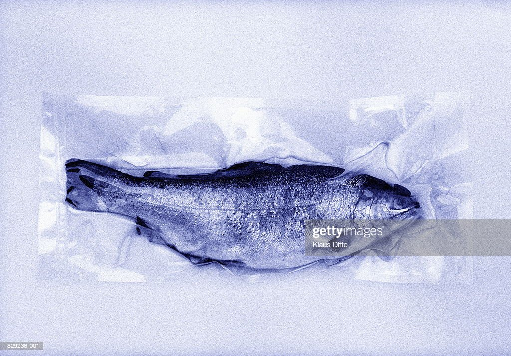 Fish in plastic packaging, close-up (toned B&W) : Stock Photo