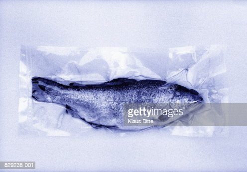 Fish in plastic packaging, close-up (toned B&W)