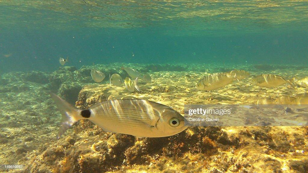 Fish in sea : Stock Photo