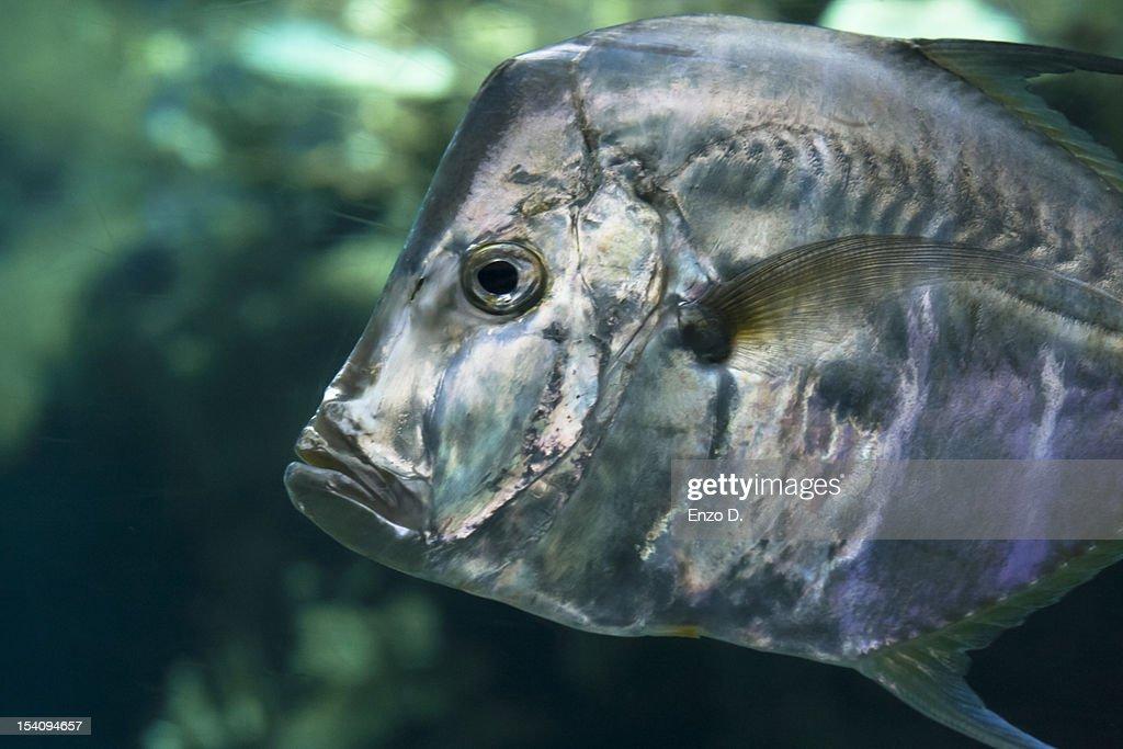 A fish in the aquarium : Stock Photo