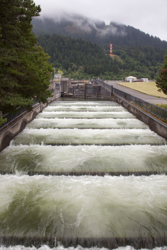 Bonneville dam stock photos and pictures getty images for Bonneville fish counts