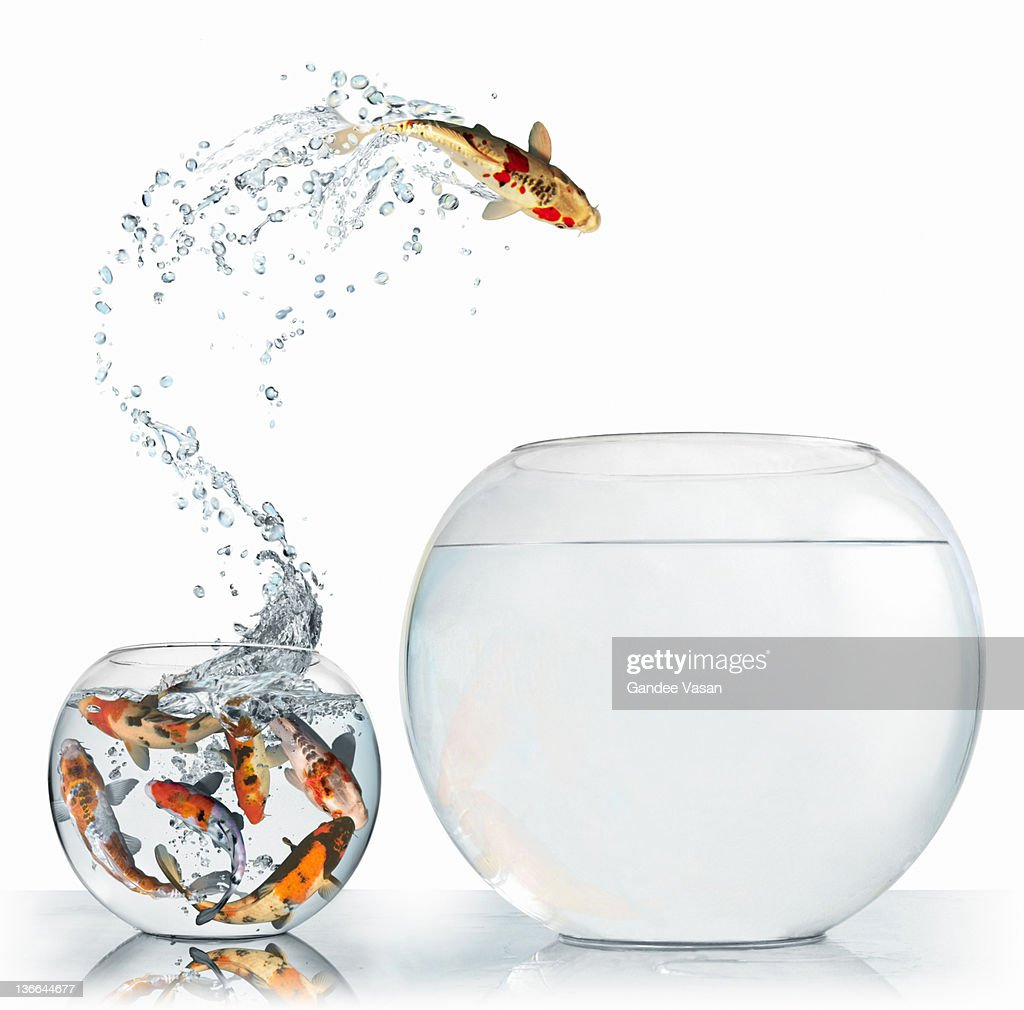 Fish leaping into larger empty bowl : Stock Photo