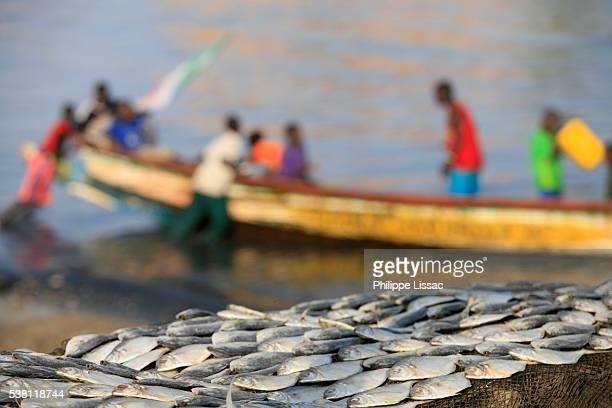 Fish Lying on Riverbank