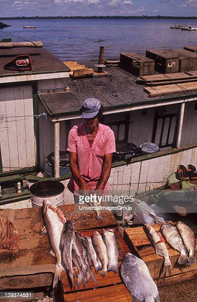 Fish Market Brazil Belem Fish Is An Important Part Of Peoples Diet In The Amazon However mercury released into some rivers by gold miners is...