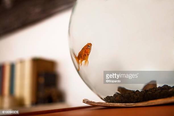 Fish on a fishtank