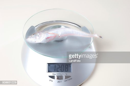 fish on a scale : Stock Photo