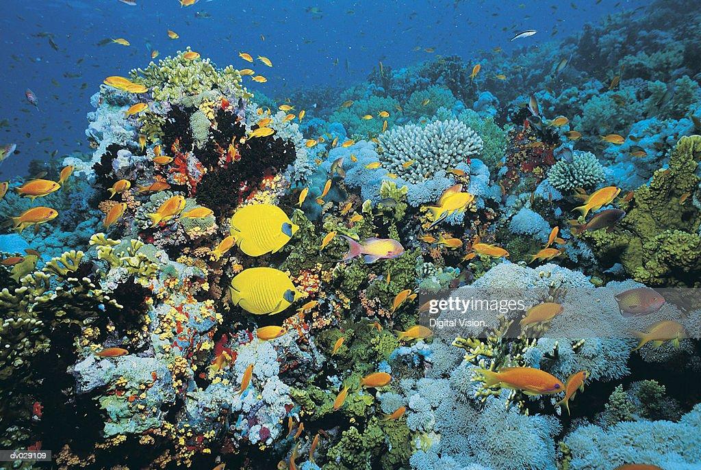 Fish on Shark Reef, Egypt : Stock Photo