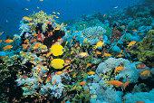 Fish on Shark Reef, Egypt