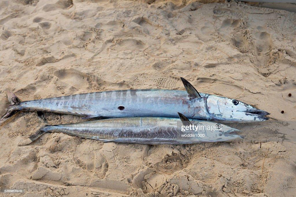 fish on the beach : Stock Photo