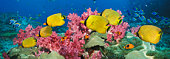 Fish over coral reef, underwater view, (digital composite)