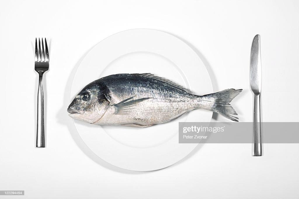 Fish : Stock Photo