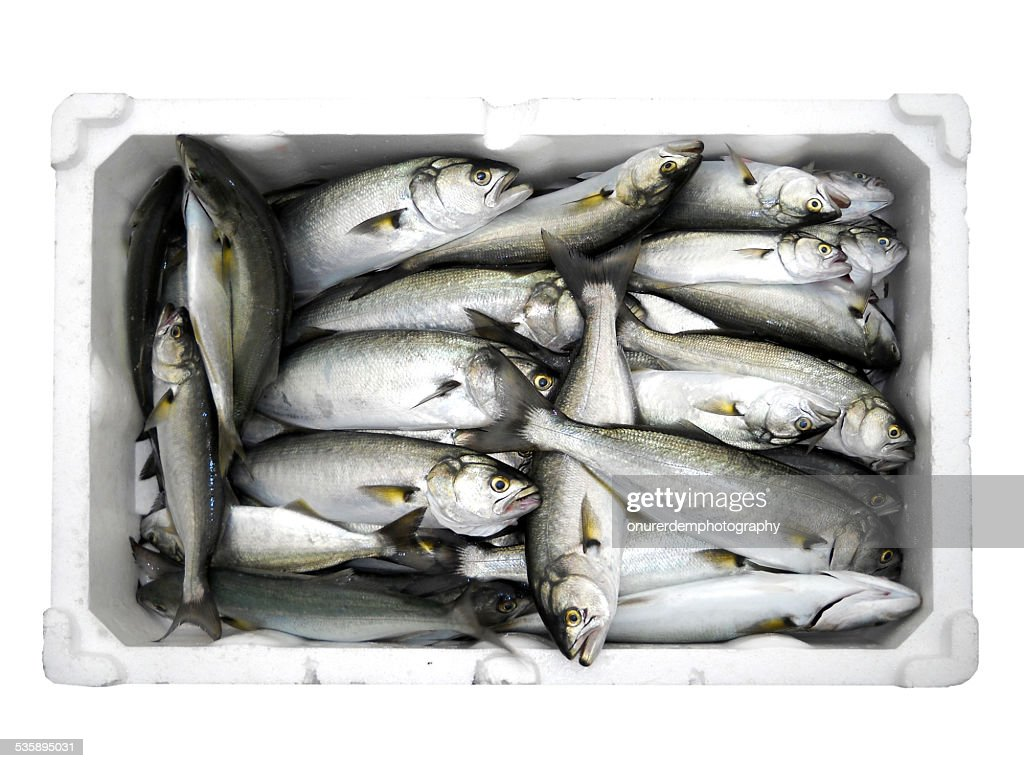 Fish : Stock Photo