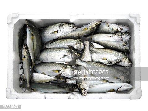 Fish : Stock-Foto