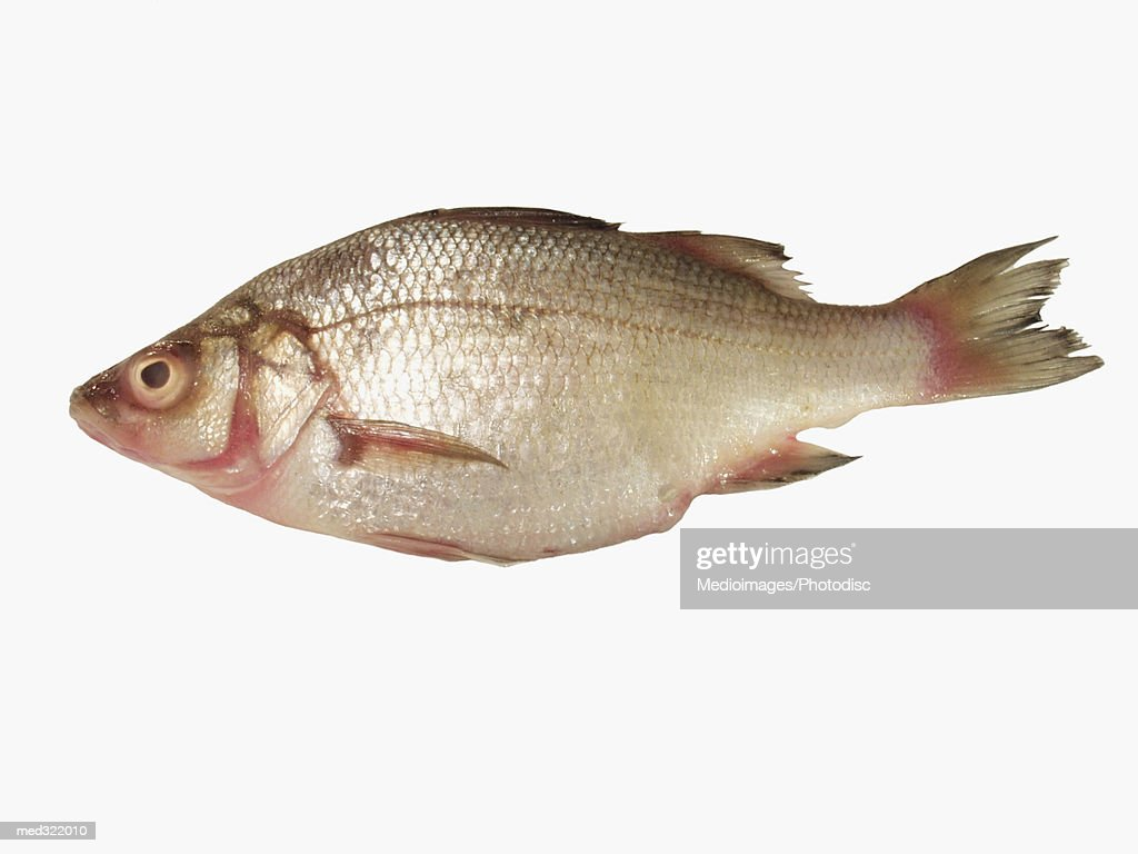 A fish : Stock Photo