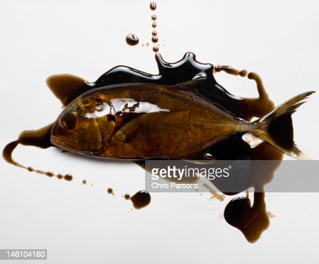 Fish smothered in motor oil. : Stock Photo