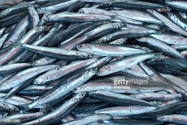 Fish sold at Fera o Luni Market at Piazza Carlo Alberto, Catania, Sicily, Italy