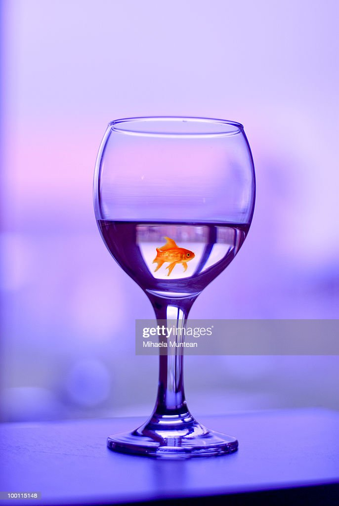 Fish swimming in a wine glass : Stock Photo