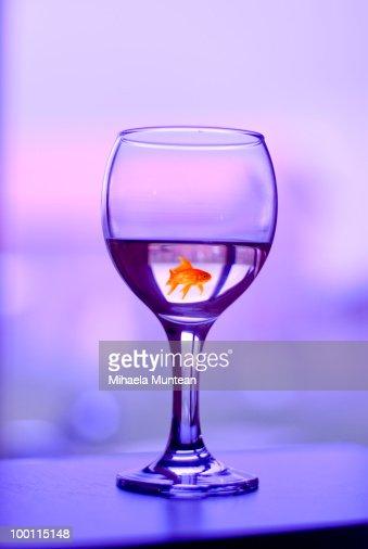 Fish swimming in a wine glass : Stock Photo