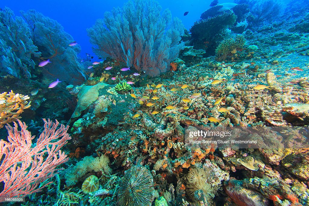 Fish swimming in coral reef : Stock Photo