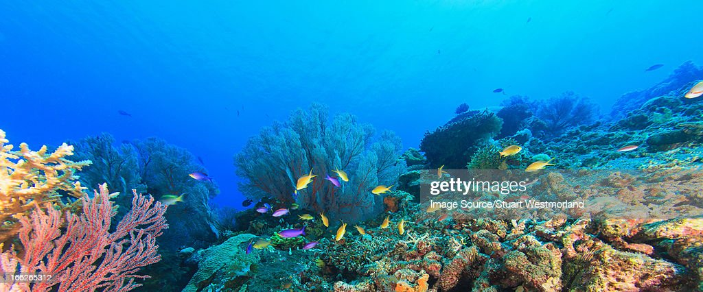 Fish swimming in coral reef