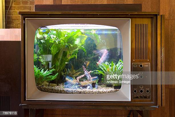 A fish tank in a television