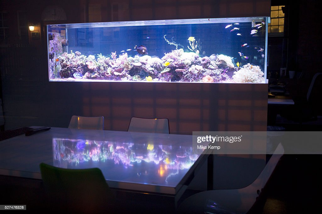 UK London Fish tank inside an office meeting room Pictures