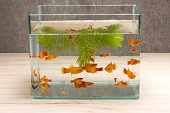fish tank on table wooden