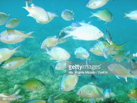 Fish underwater stock photo getty images for Ma fishing license cost