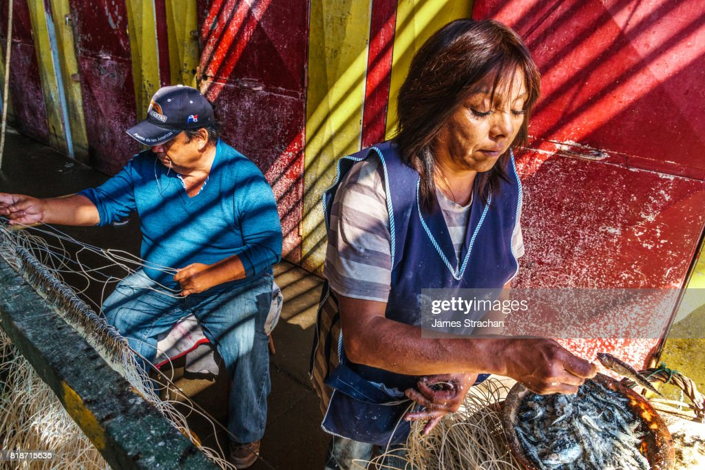 Fisherman and his helper baiting lines with sardines before the next expedition (1500 sardines per line), at Caletas Portales (Fishermen's Wharf), Valparaiso, UNESCO World Heritage Site, Chile : Stock Photo