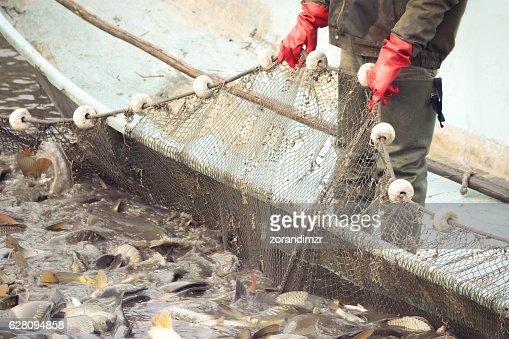 Fisherman at Work : Stock Photo