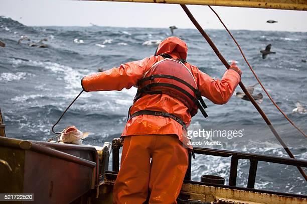 Fisherman bringing in a Pacific Cod fish