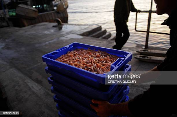 A fisherman carries a box of prawns at the fishing port of Isla Cristina near Huelva southern Spain on December 15 2011 Scores of Spanish fishing...
