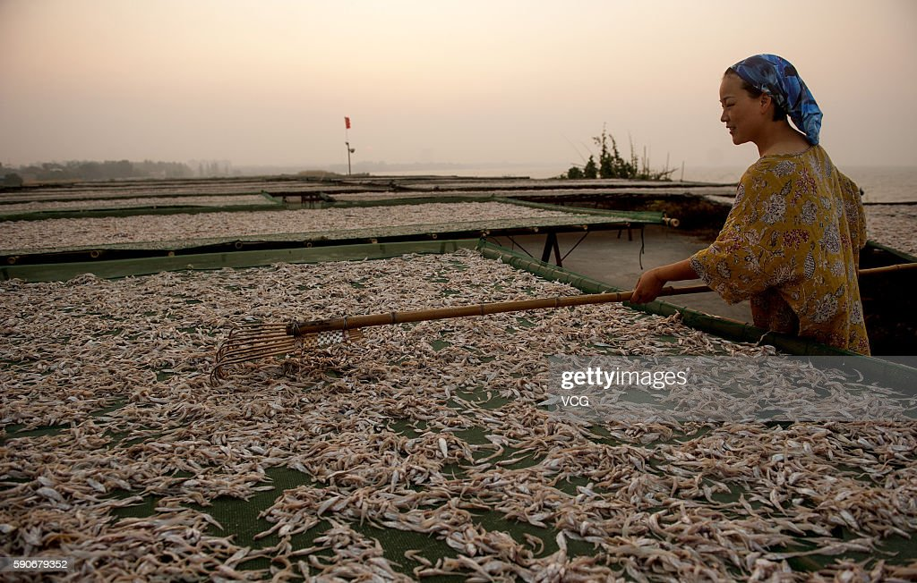 A fisherman dries whitebait fish at Zhongmiao Street on August 16 2016 in Chaohu Anhui Province of China The whitebait is one of the 'three treasures...