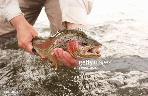 Fisherman holding rainbow trout (Oncorhynchus mykiss) in river